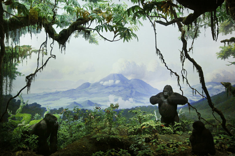 The Giant Karisimbi's DIorama, American Museum of Natural History, 2006
