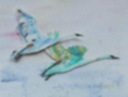 Trumper Swans Photo_72 (1).jpeg