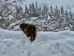 雪景色と猿🐒