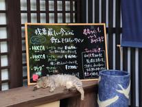 かもしか太田酒店 猫