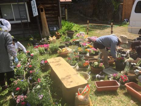 毎年恒例 白布温泉花植え♪