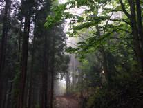 遊歩道 神秘的な朝の風景