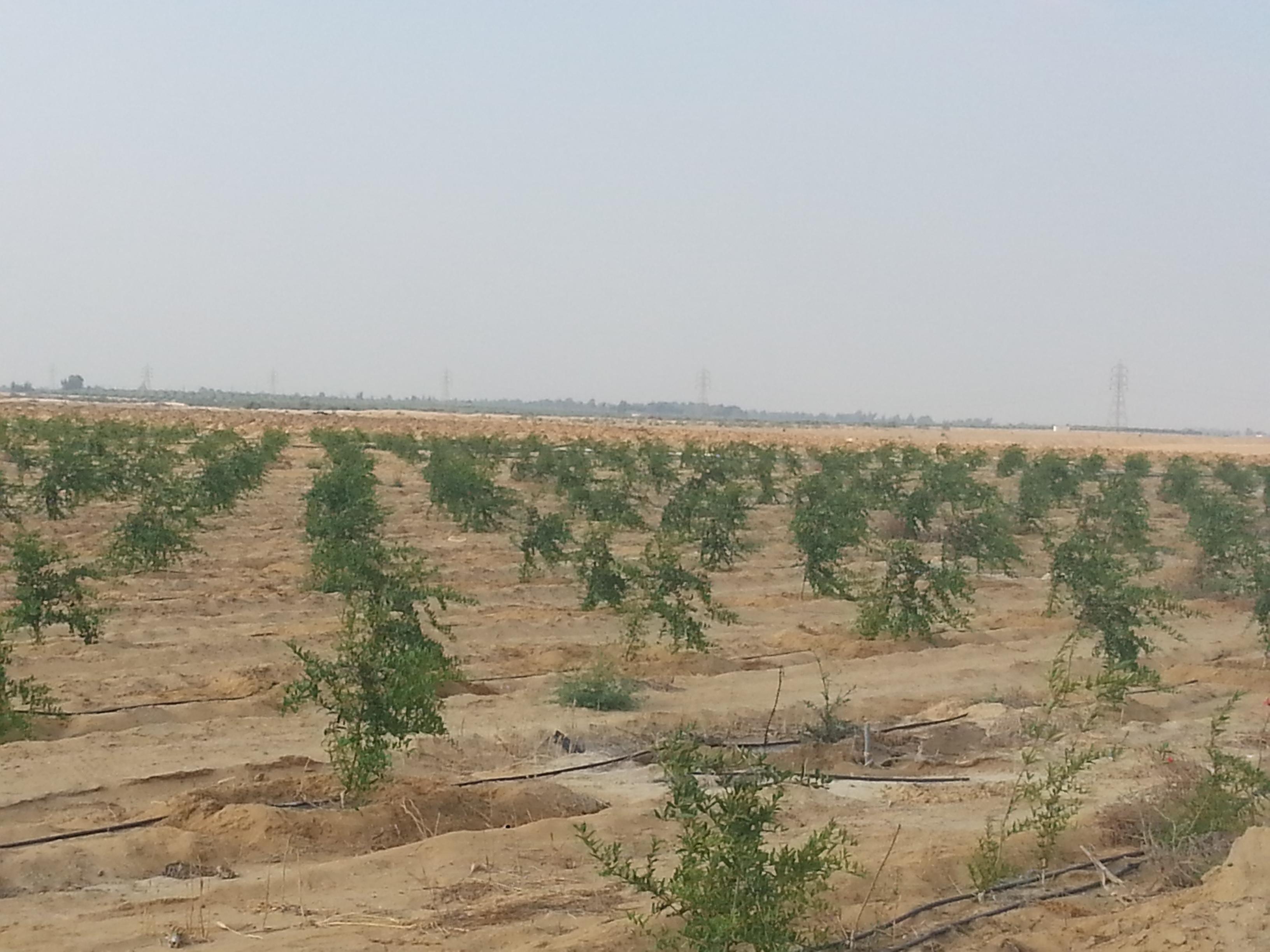 Agricultural Plantation