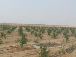 أشجار