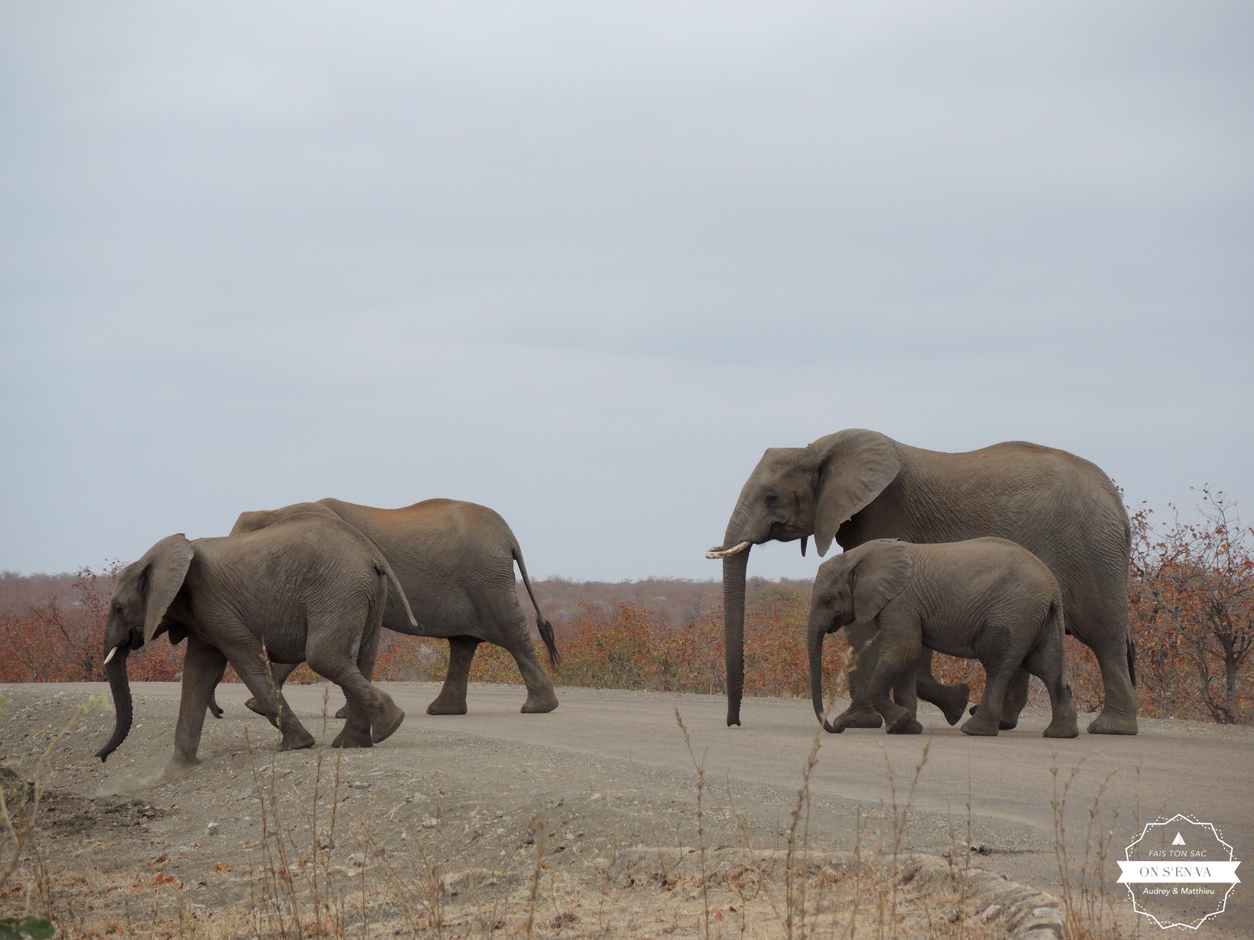Normal, des éléphants traversent!