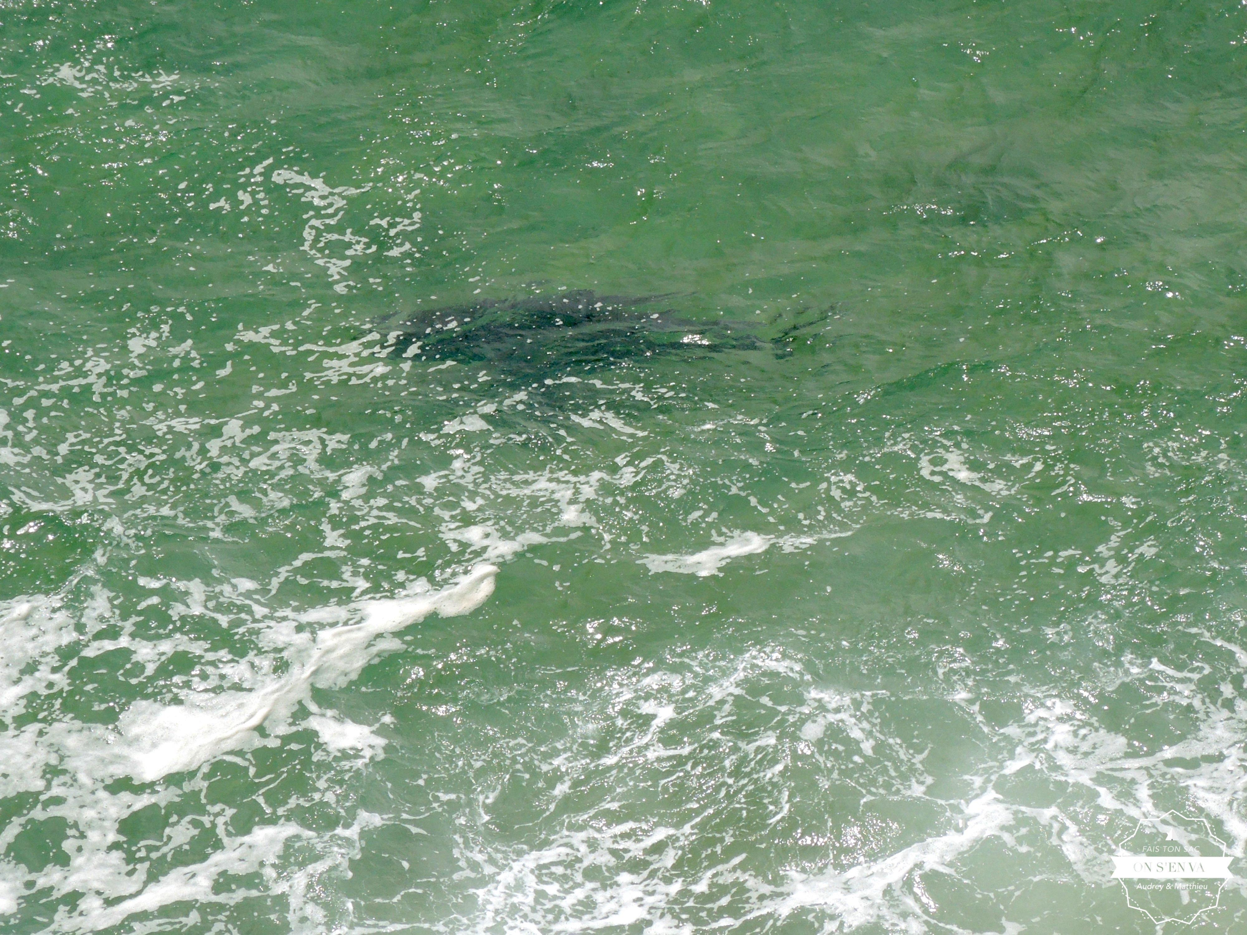 Un joli requin à quelques mètres