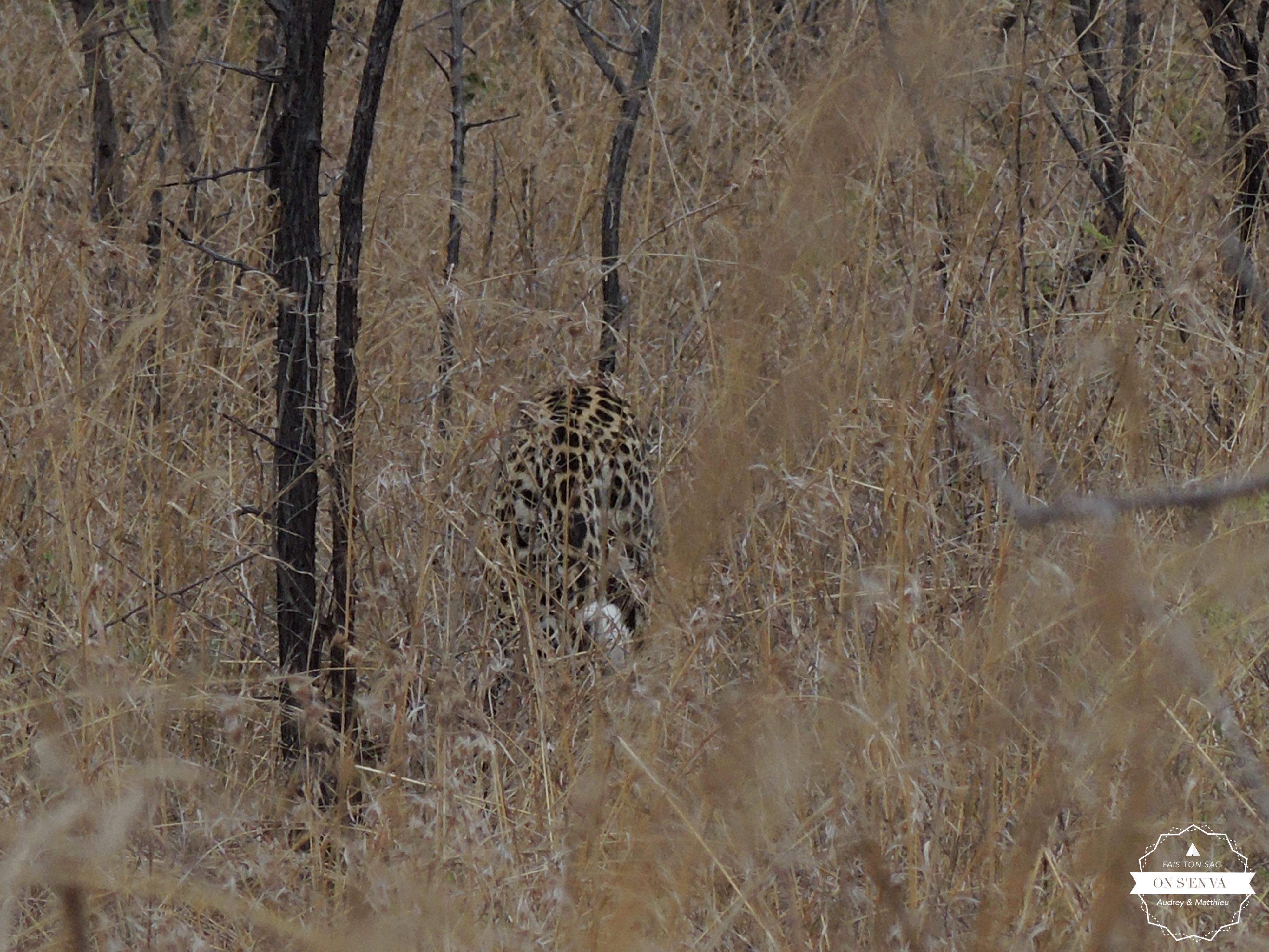 Le guépard du dernier kilomètre