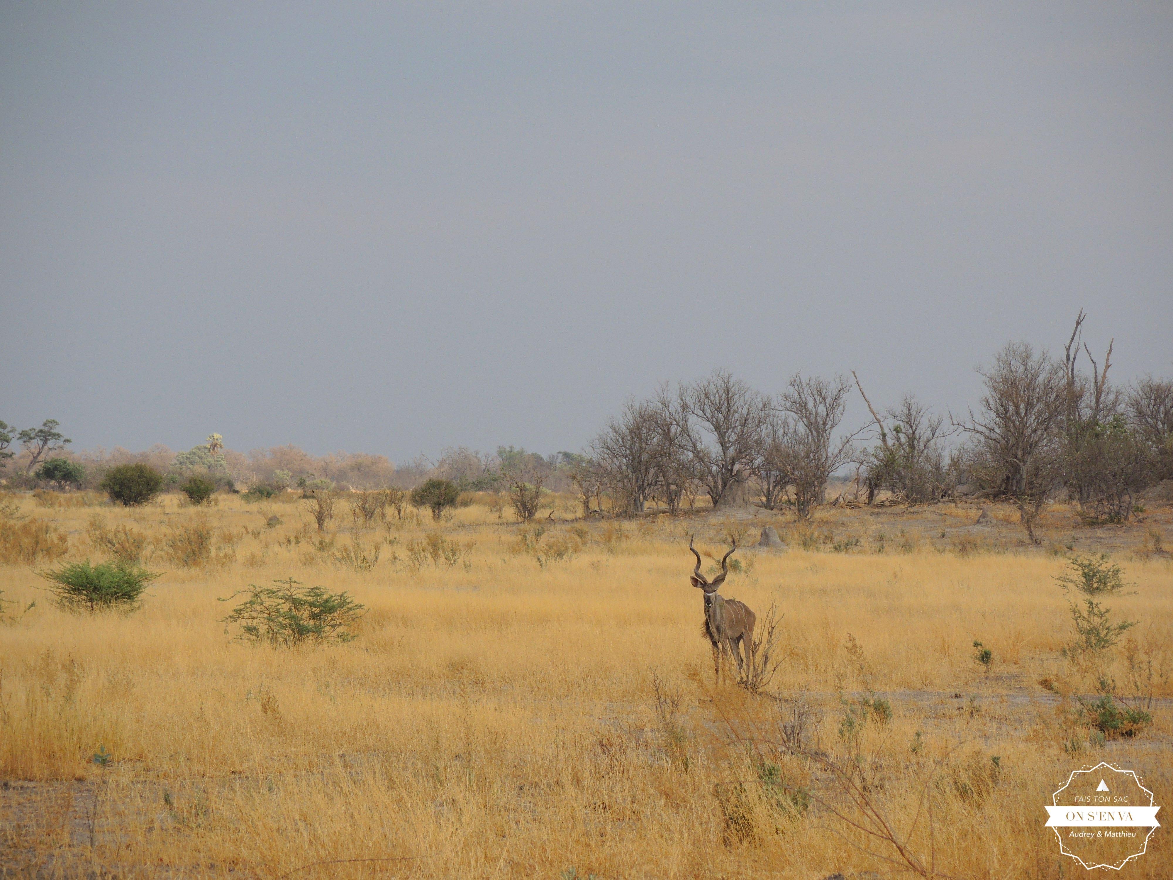Un kudu