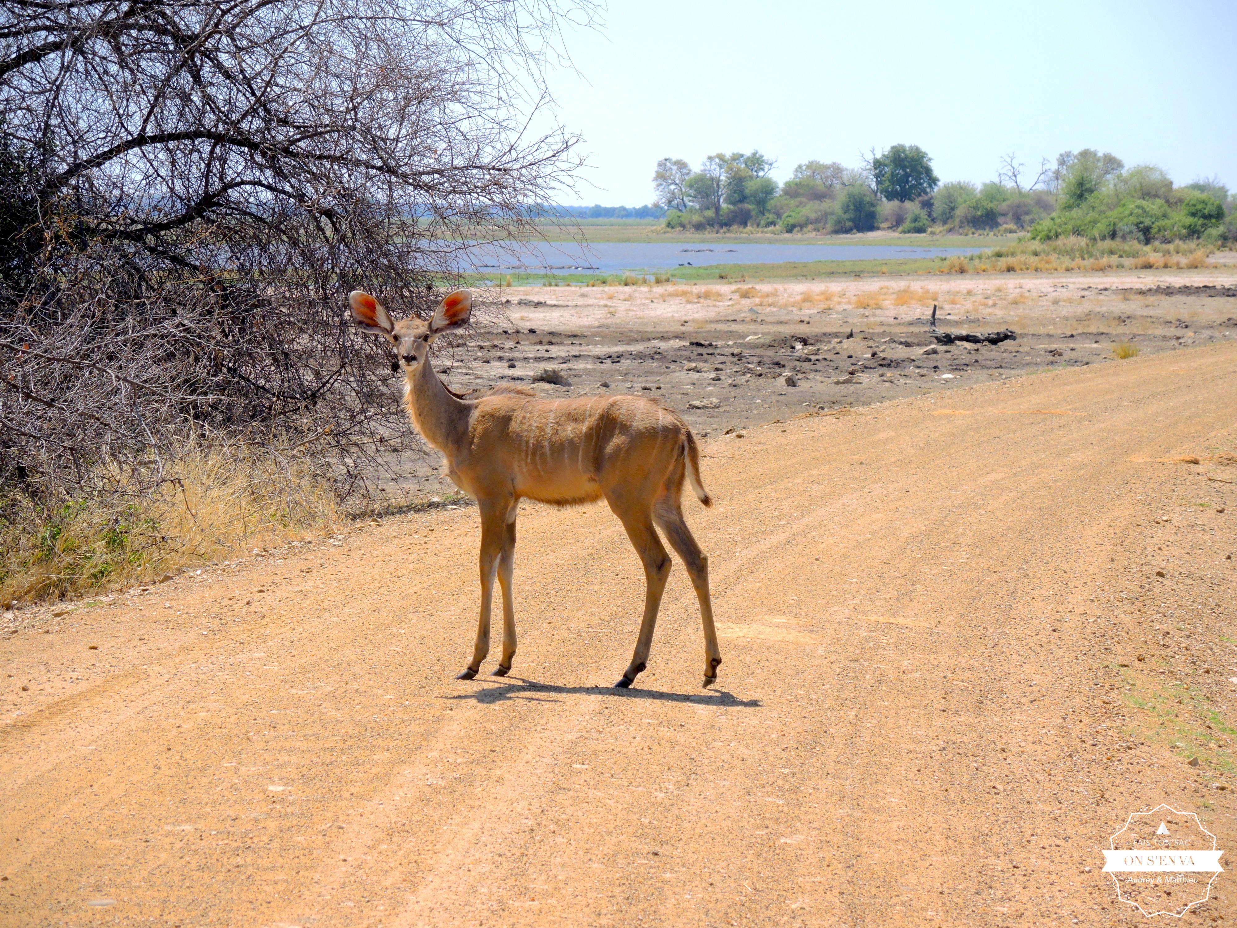 Un impala pour nous accueillir