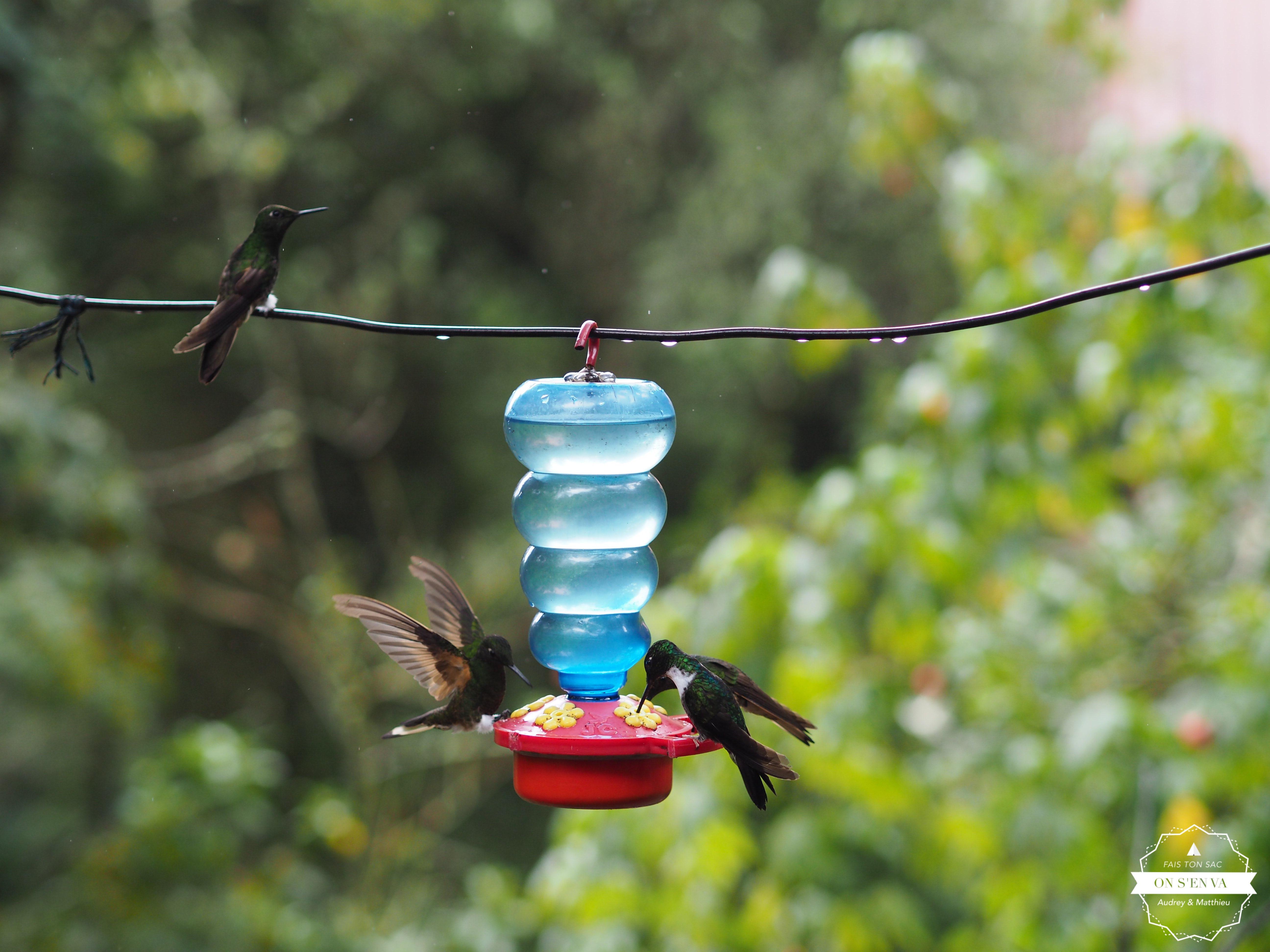 avec ses colibris
