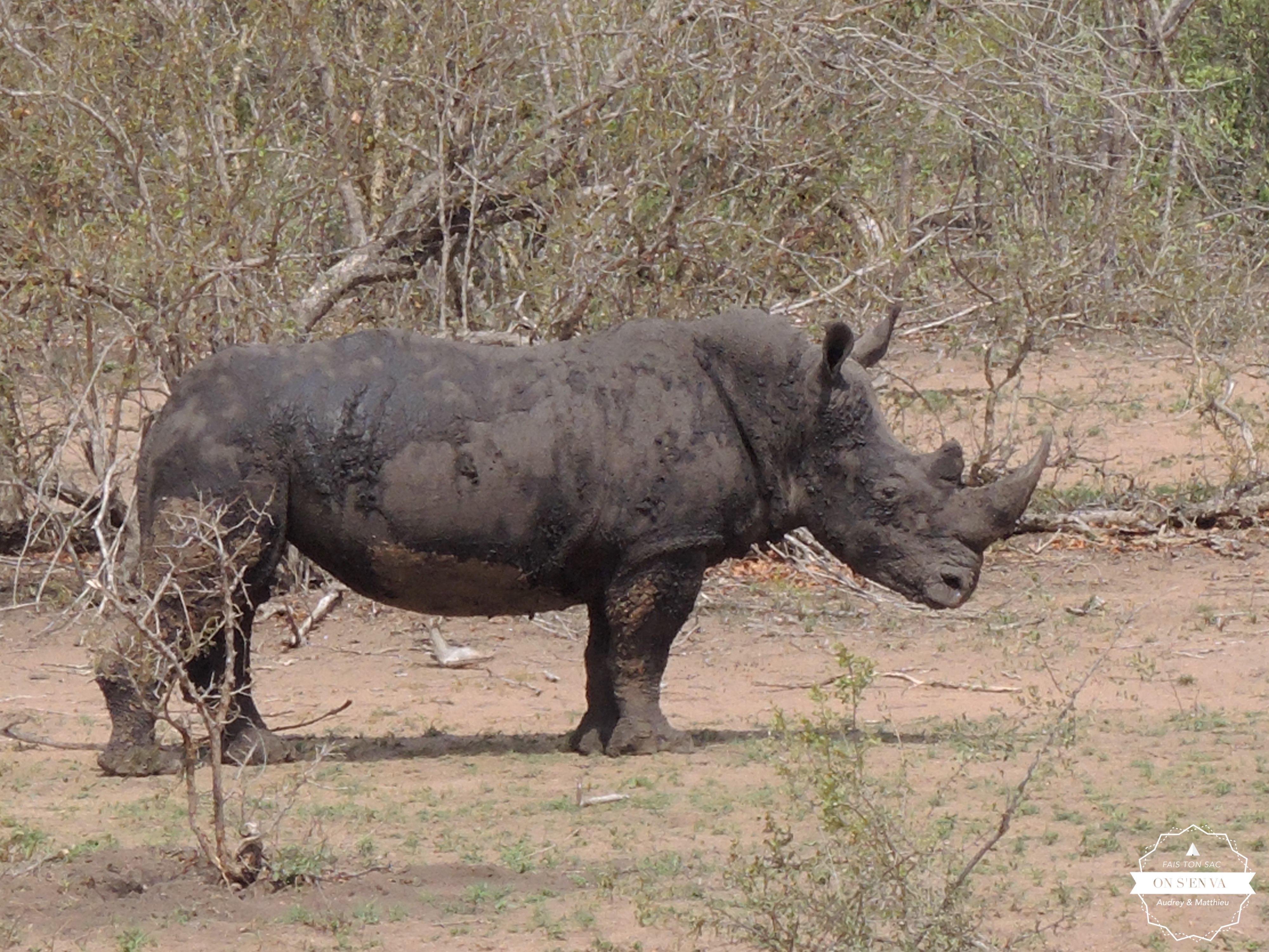 Papa rhino