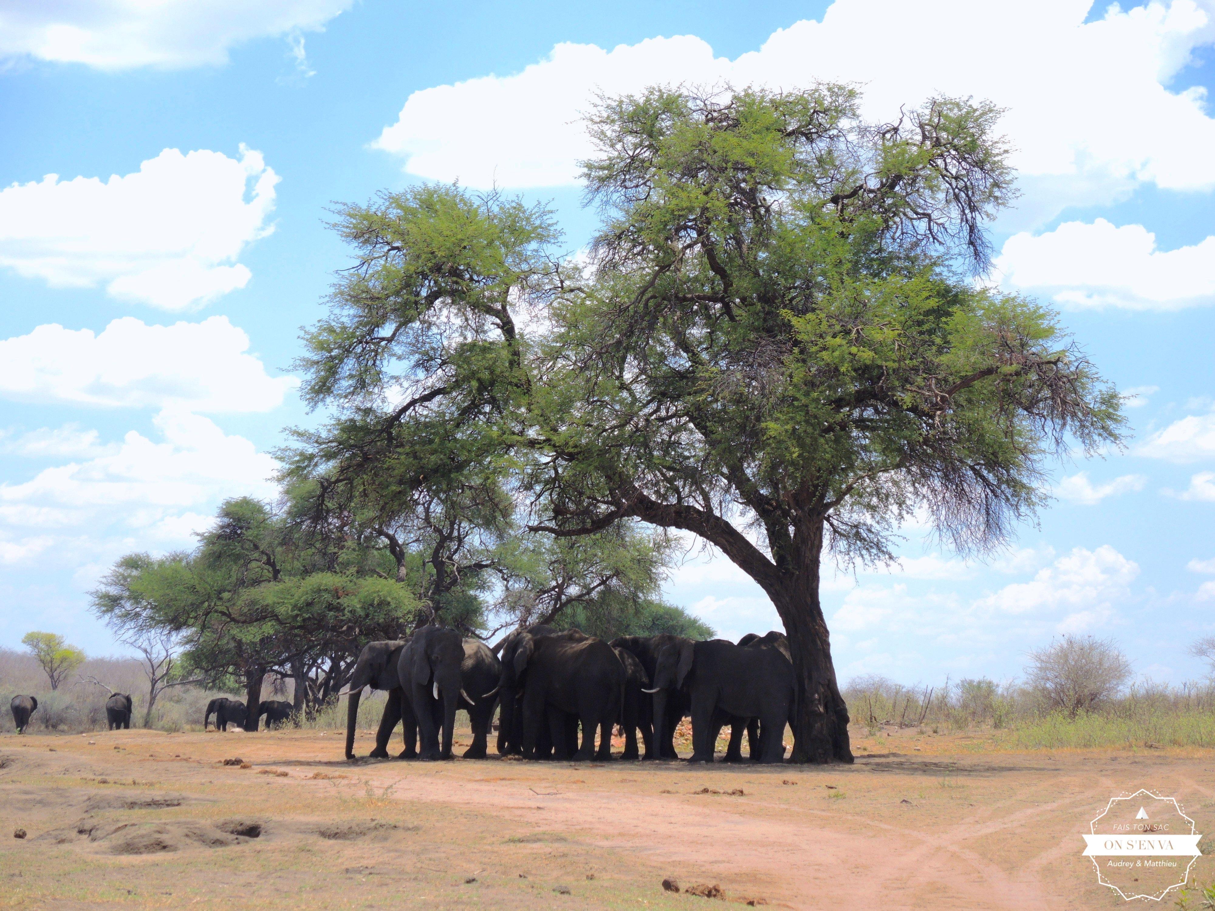 Les éléphants cherchent l'ombre