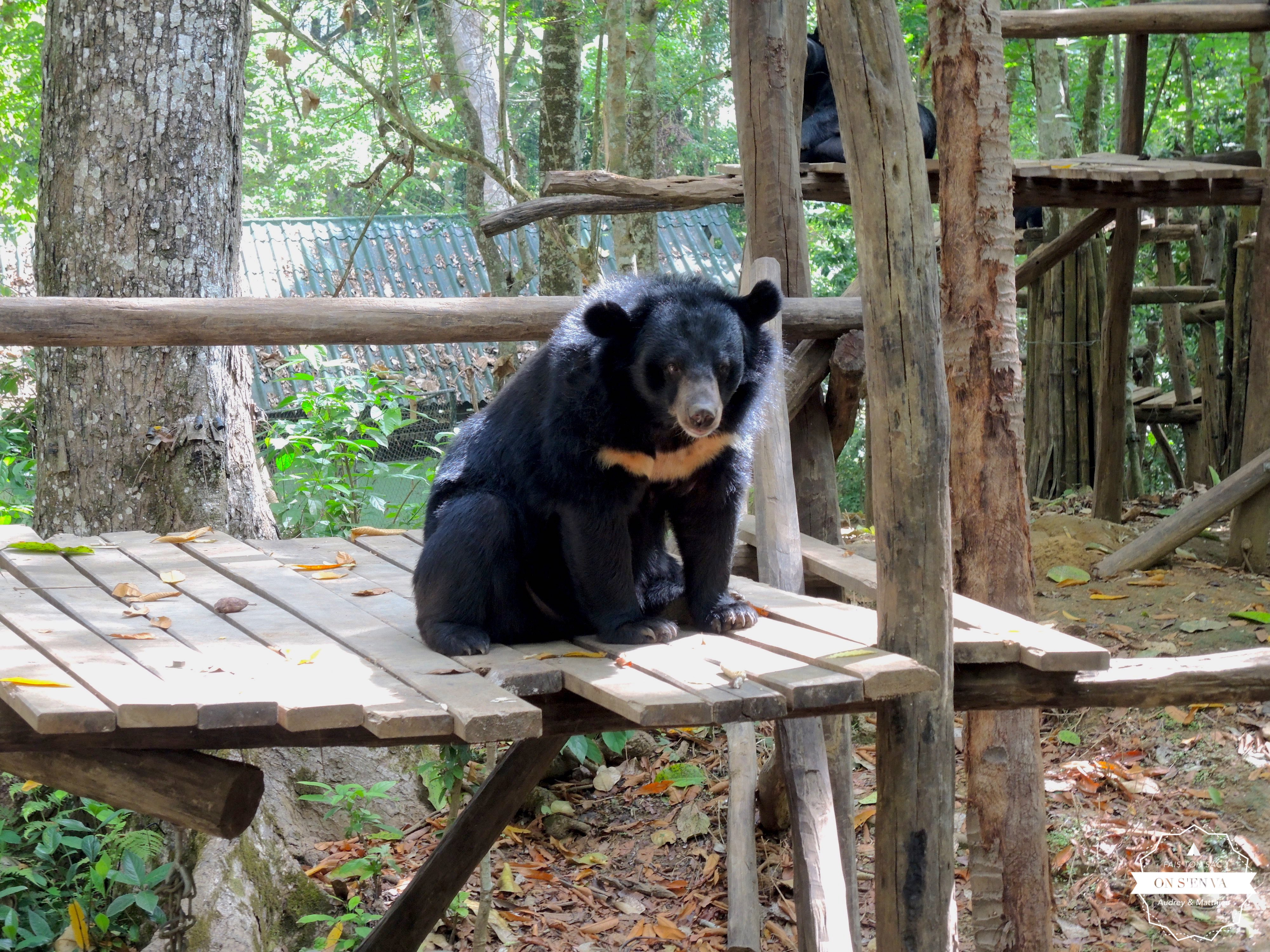 Refuge pour les ours à Tad Kuang Si