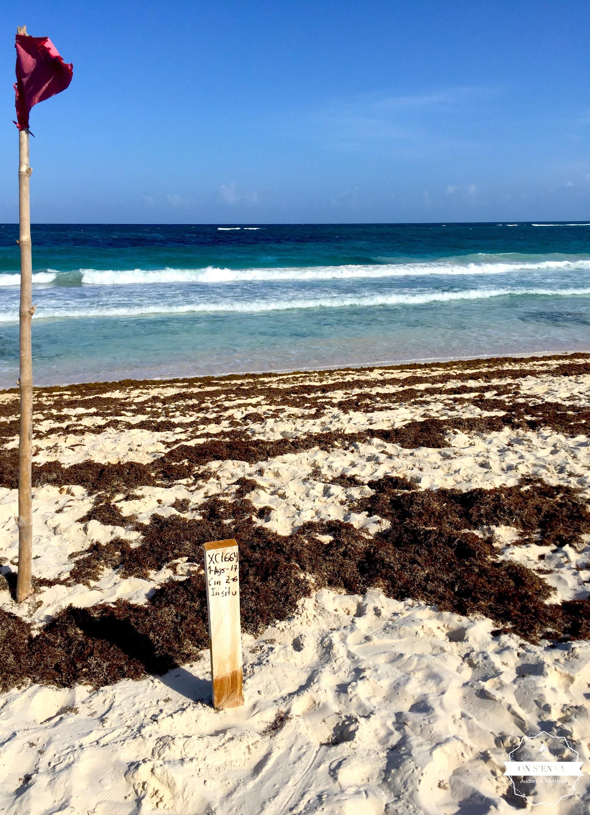 Xcacel, la plage aux tortues