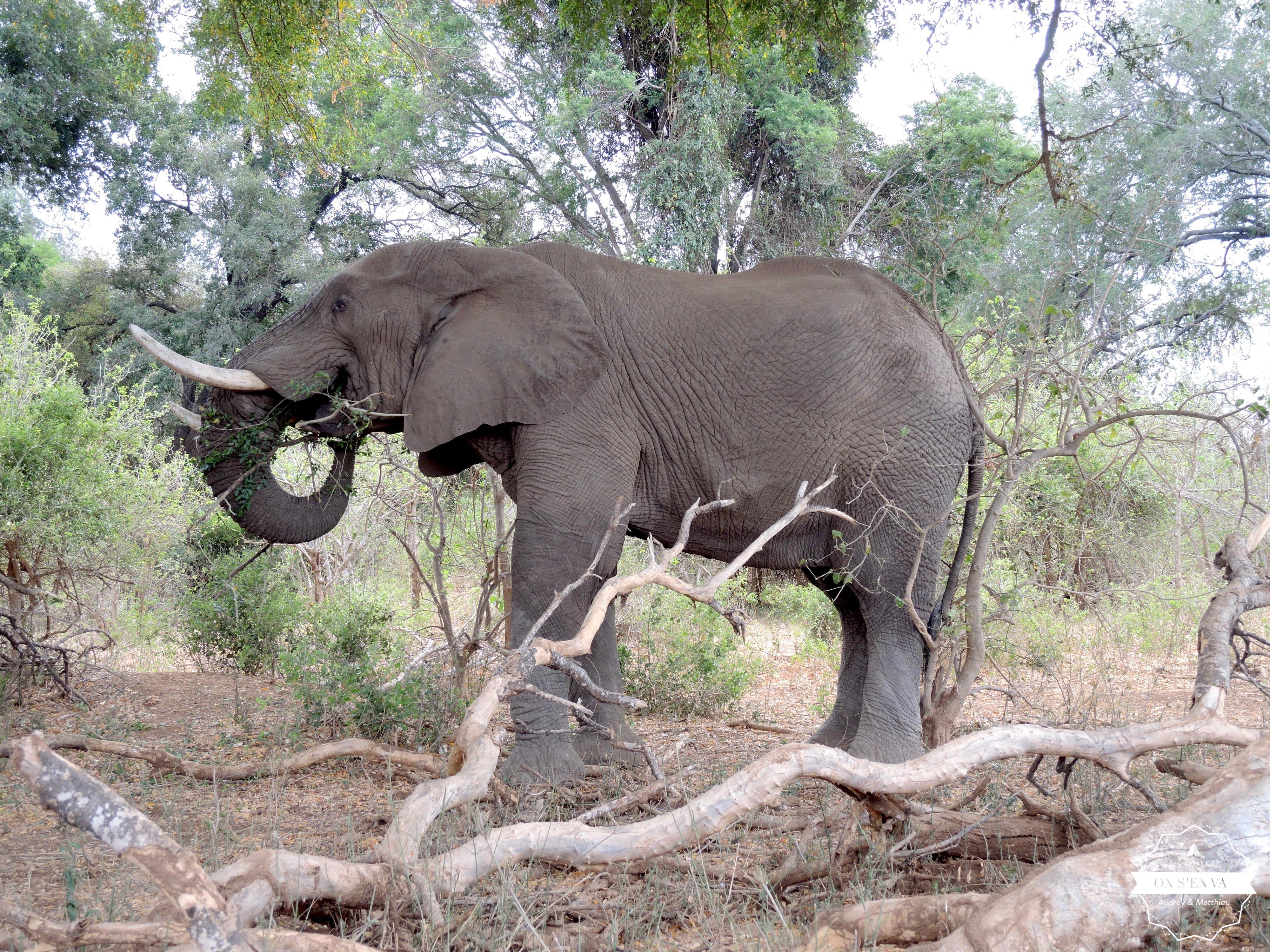 Accueillis par un éléphant