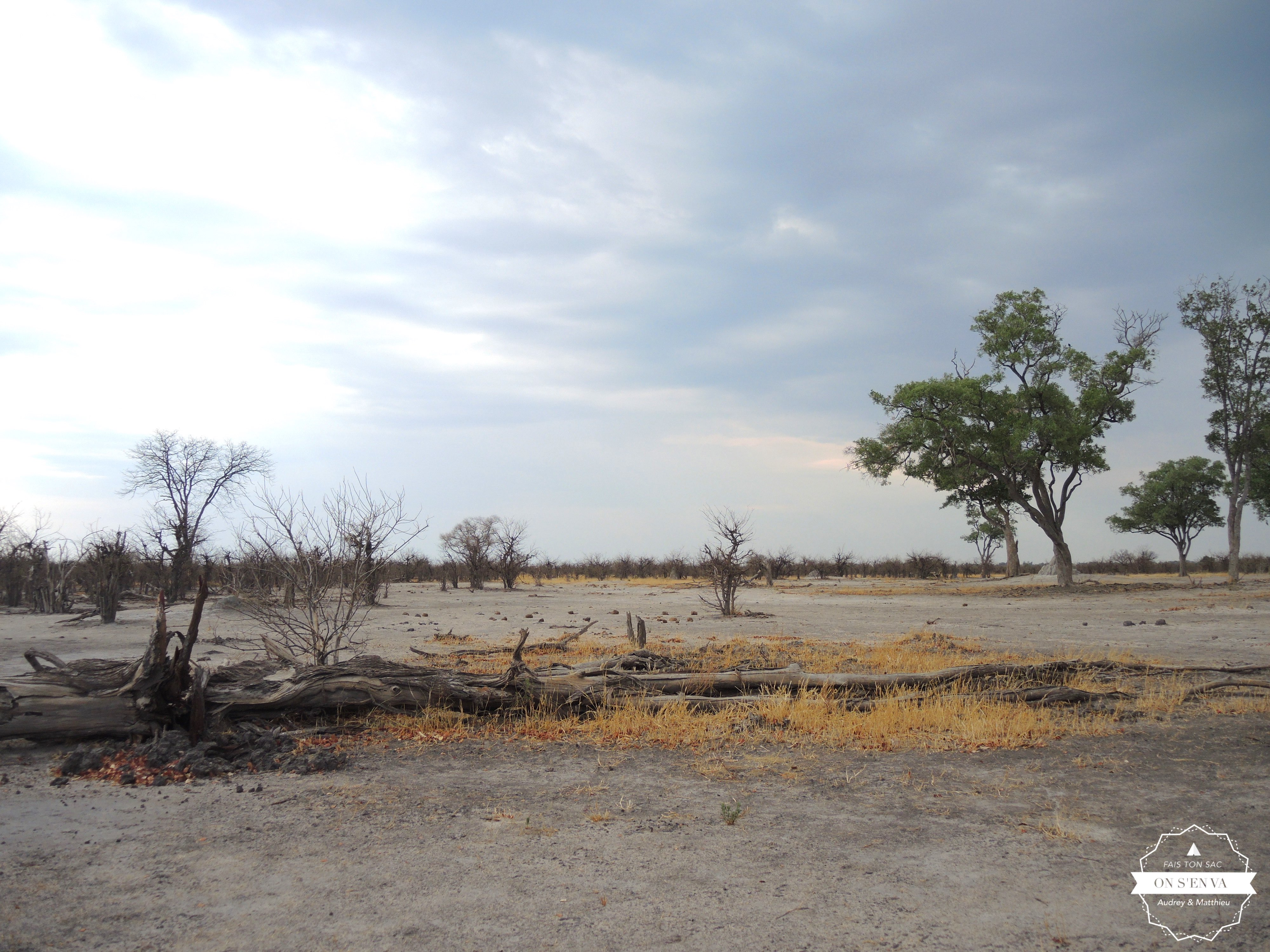 Arrivée à Moremi Game Reserve