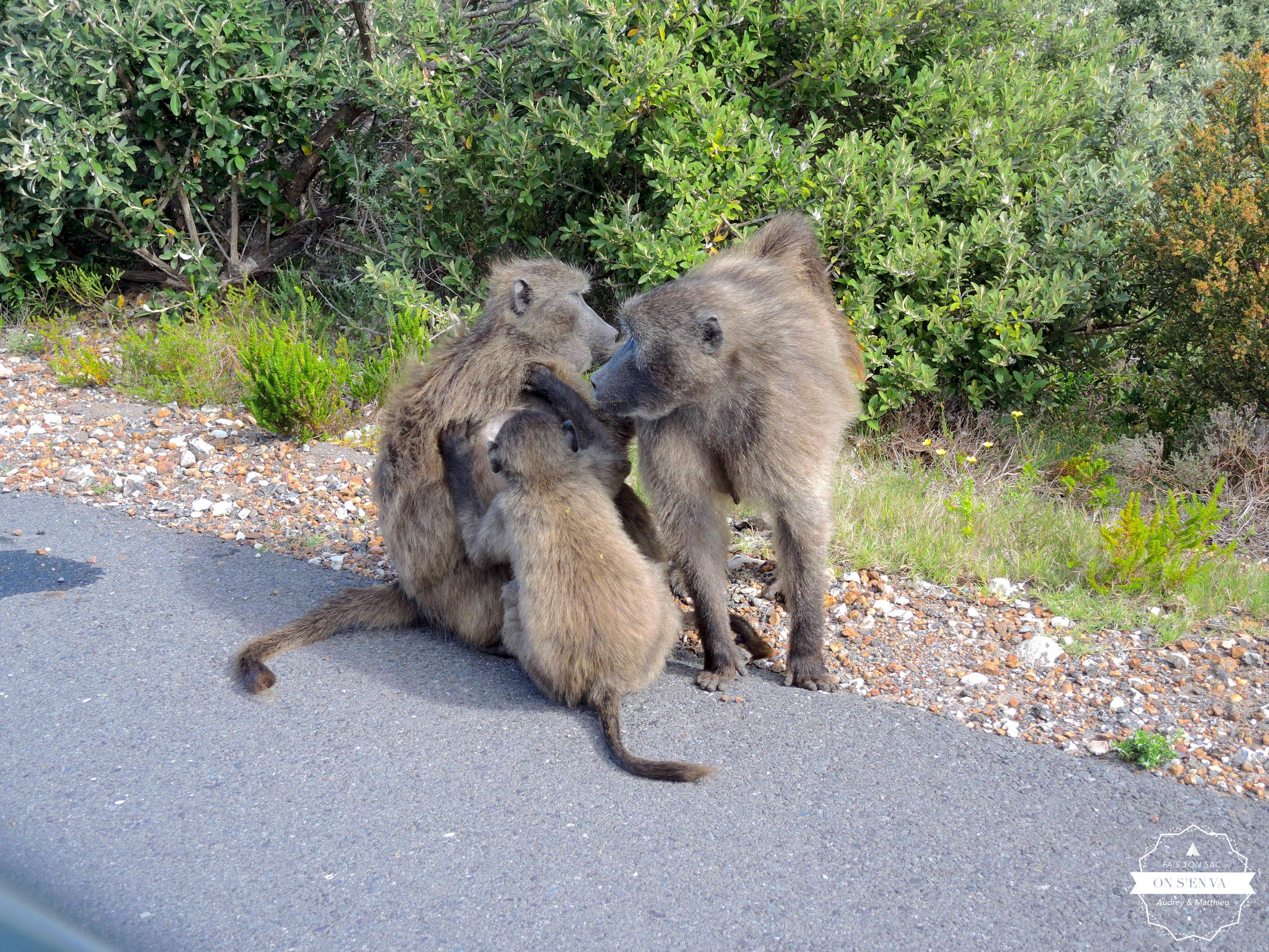 Les babouins sur la route...