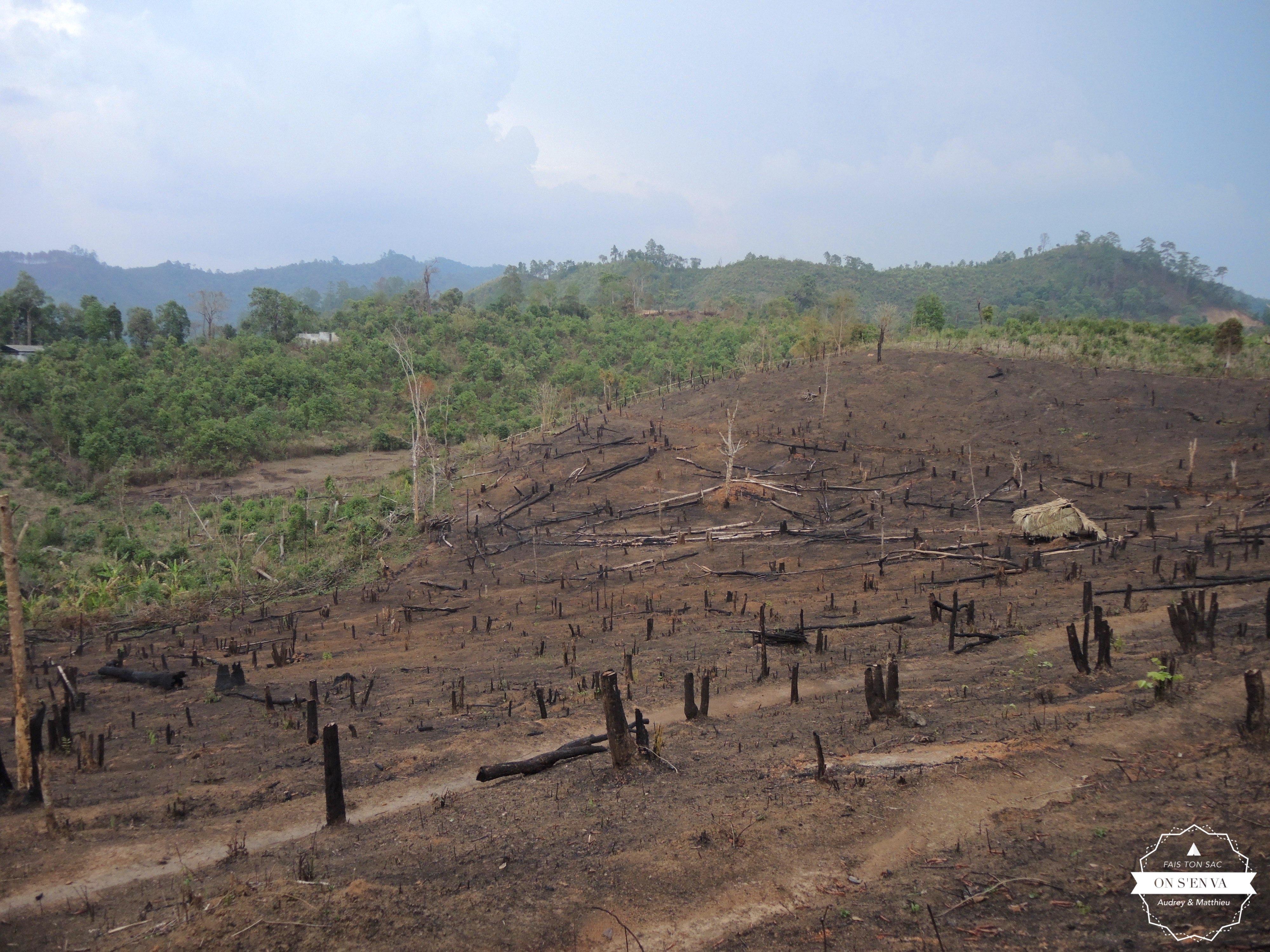 Des champs brûlés