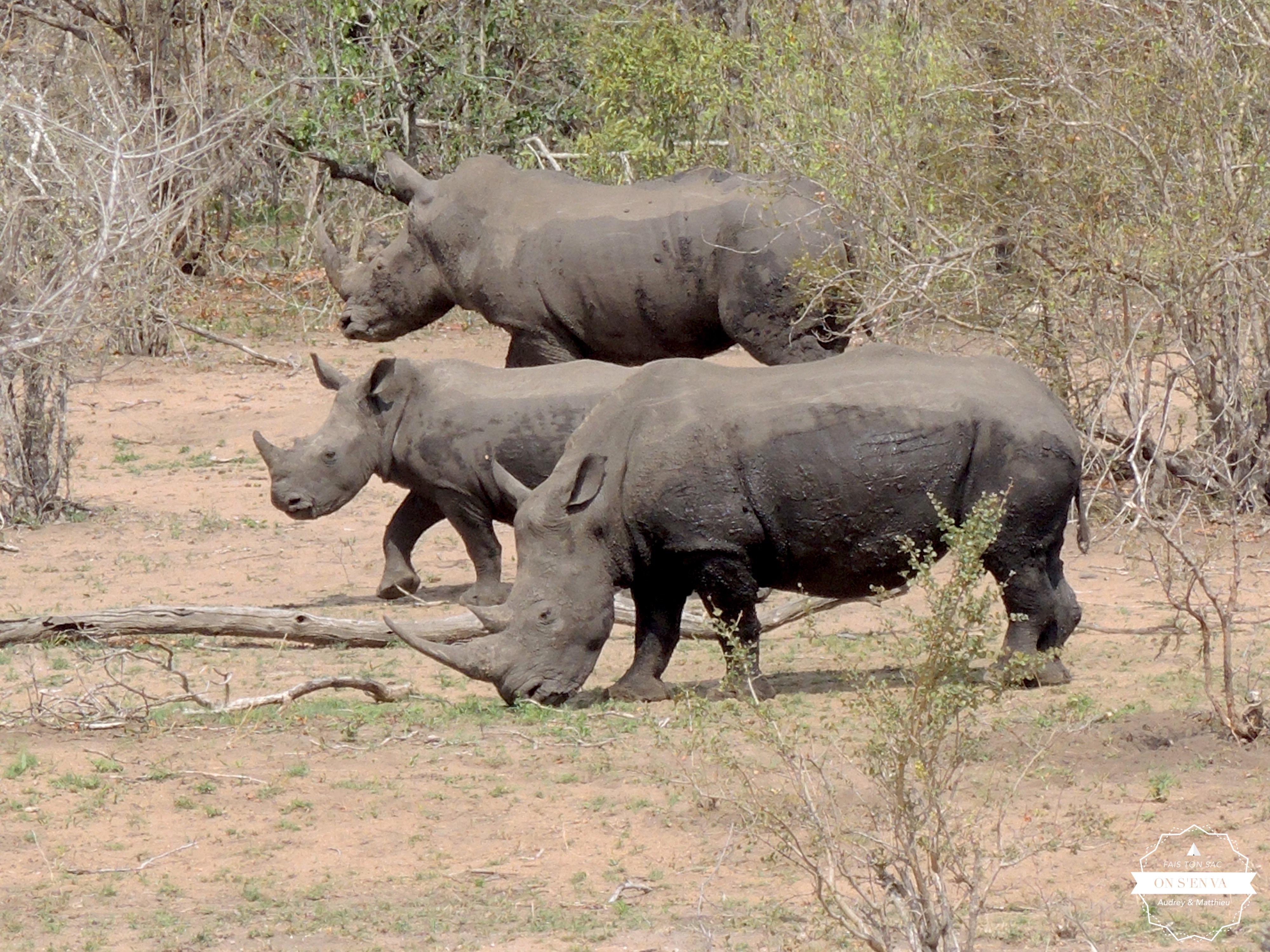 La famille rhino (blanc)