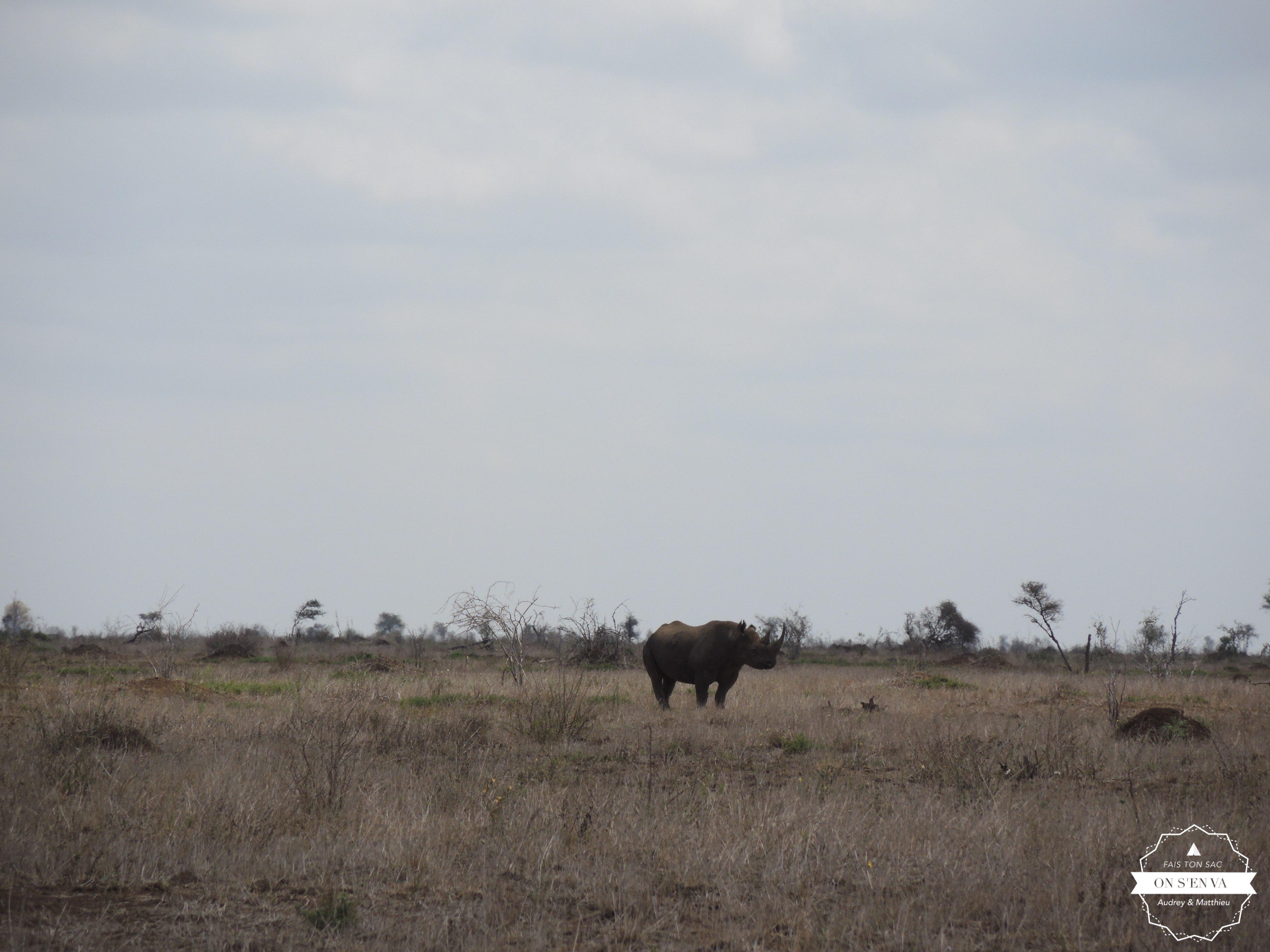 Et puis, LE rhinocéros noir au loin