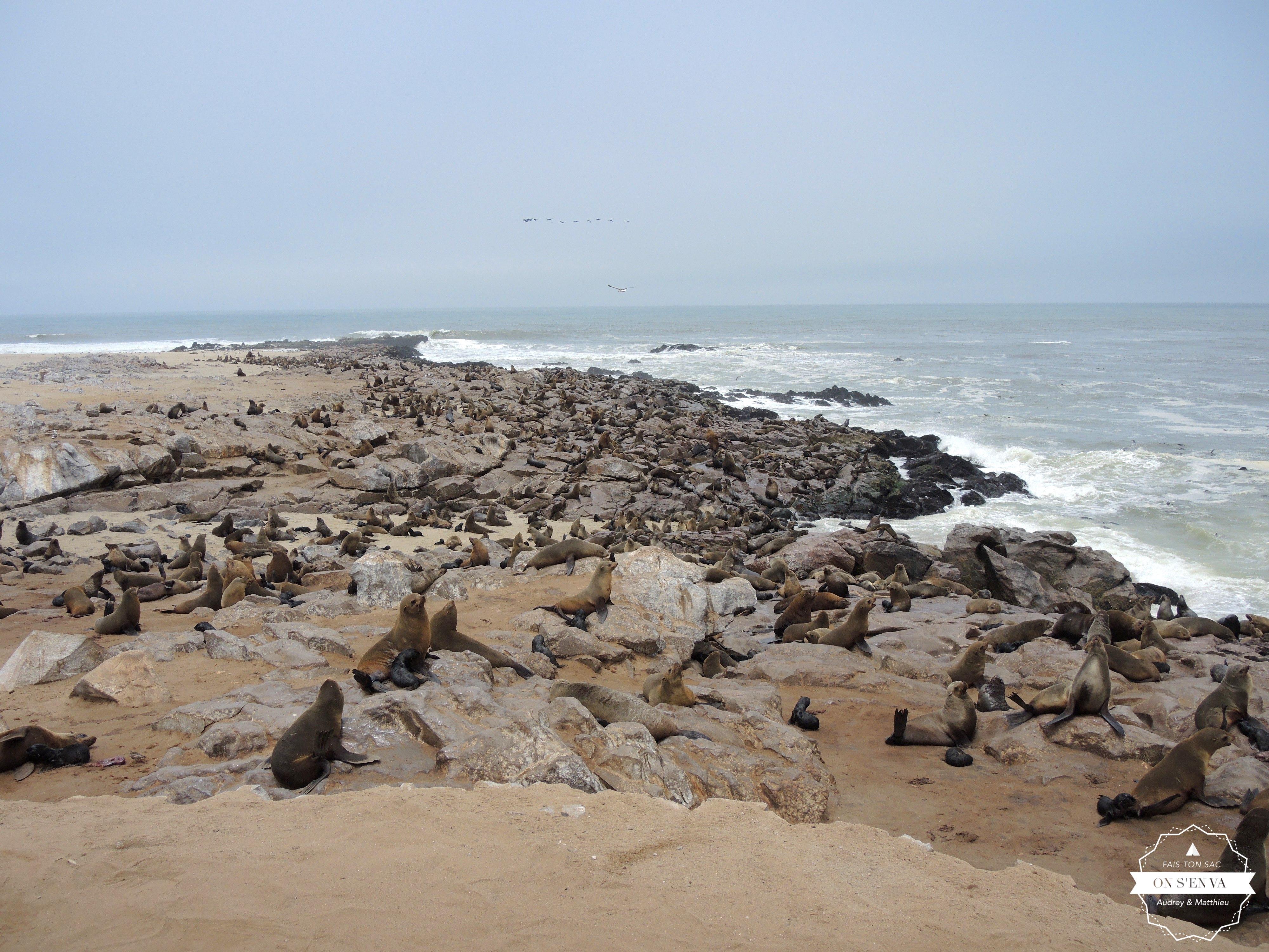 Les phoques de Cape Cross