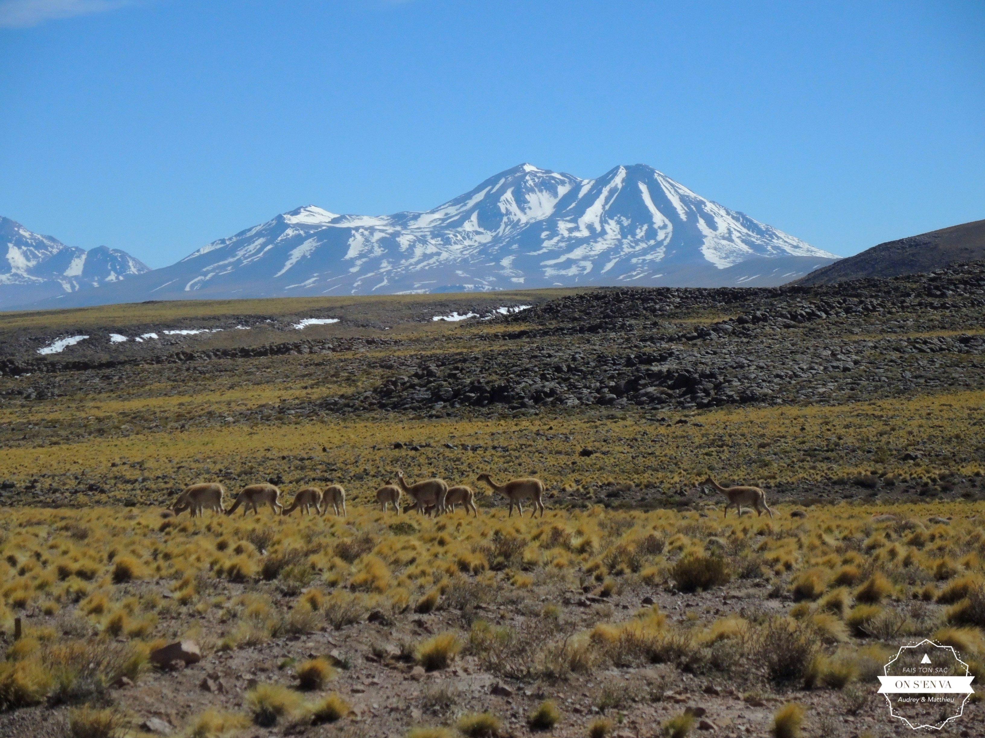 Cerro Miñiques au loin...