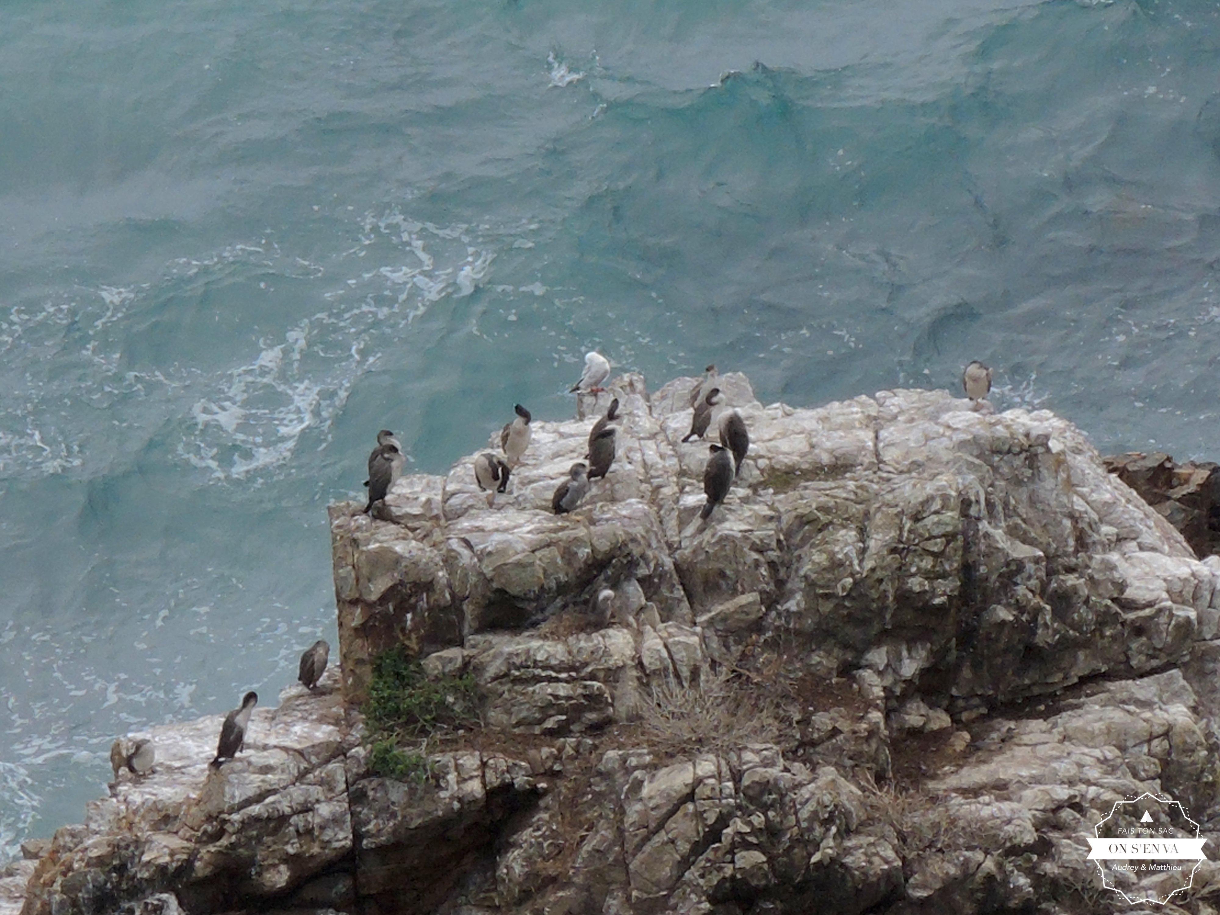 Pingouins à Nugget Point