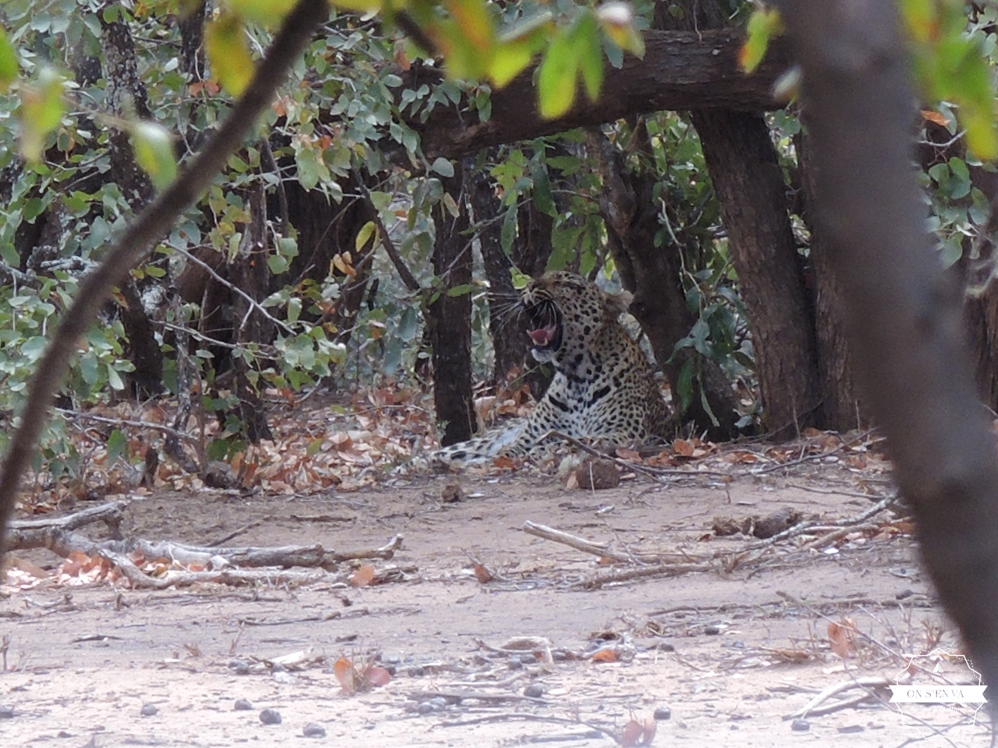 Notre premier léopard...