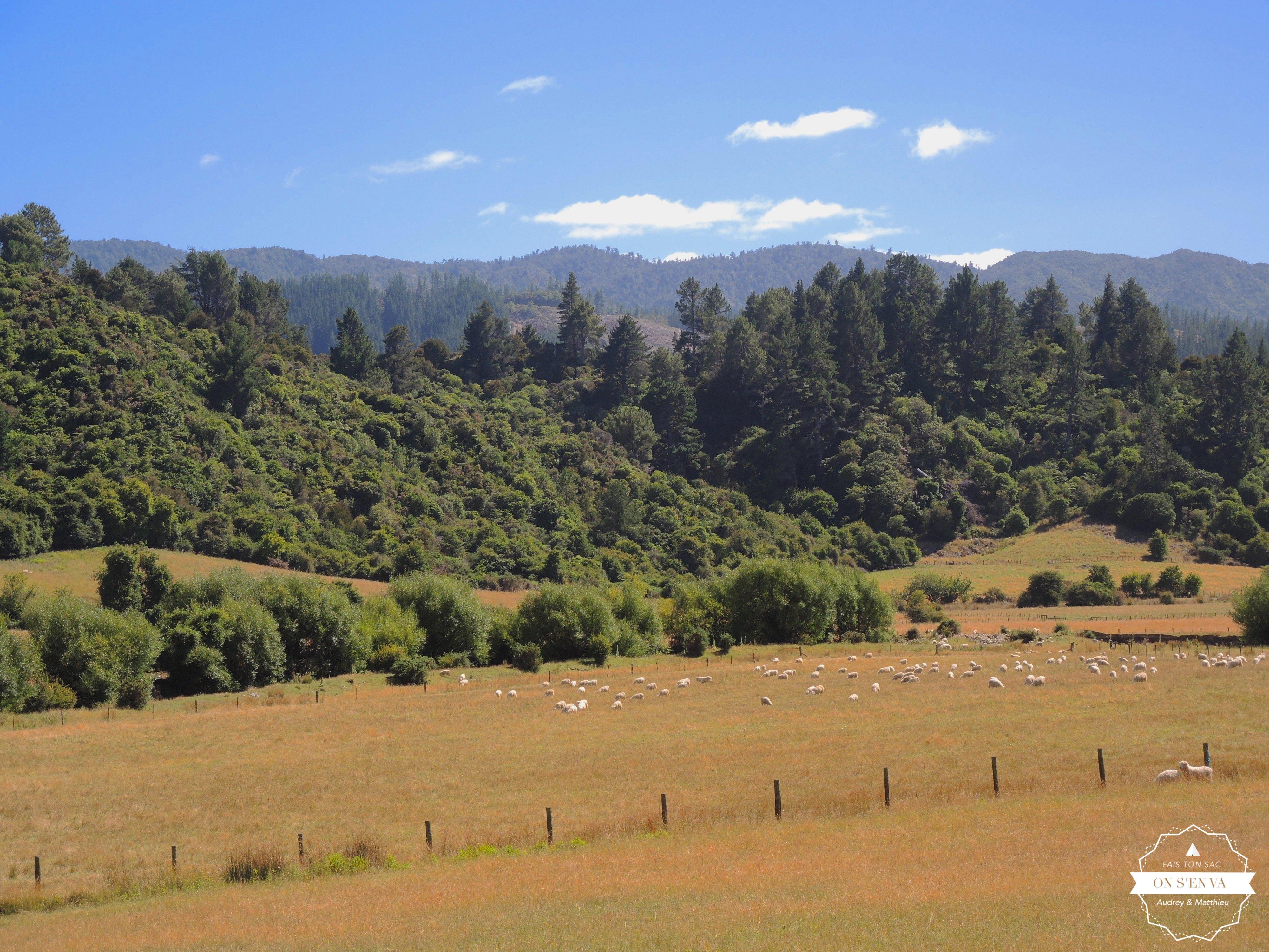 En allant vers l'Abel Tasman NP