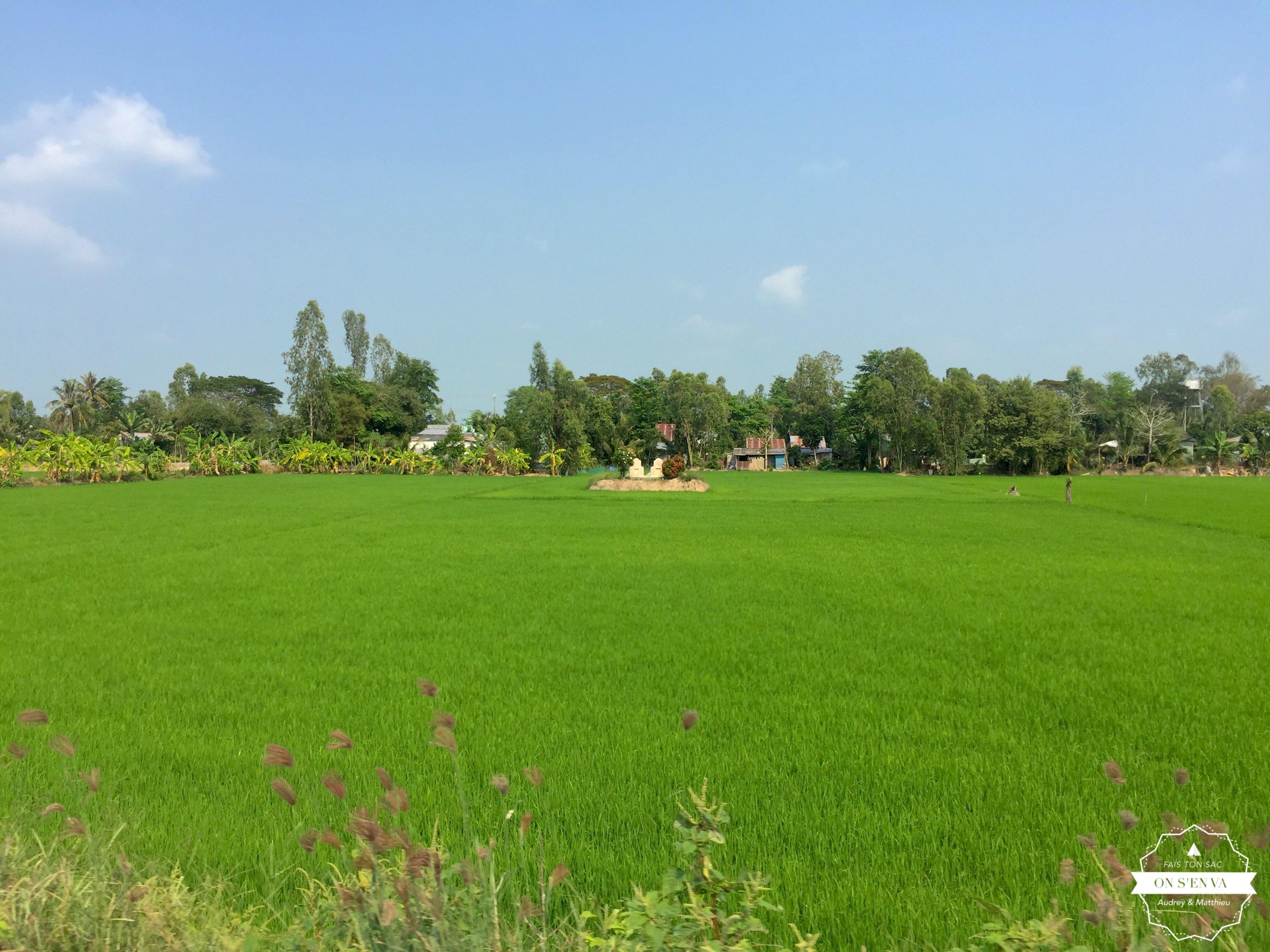 par les rizières