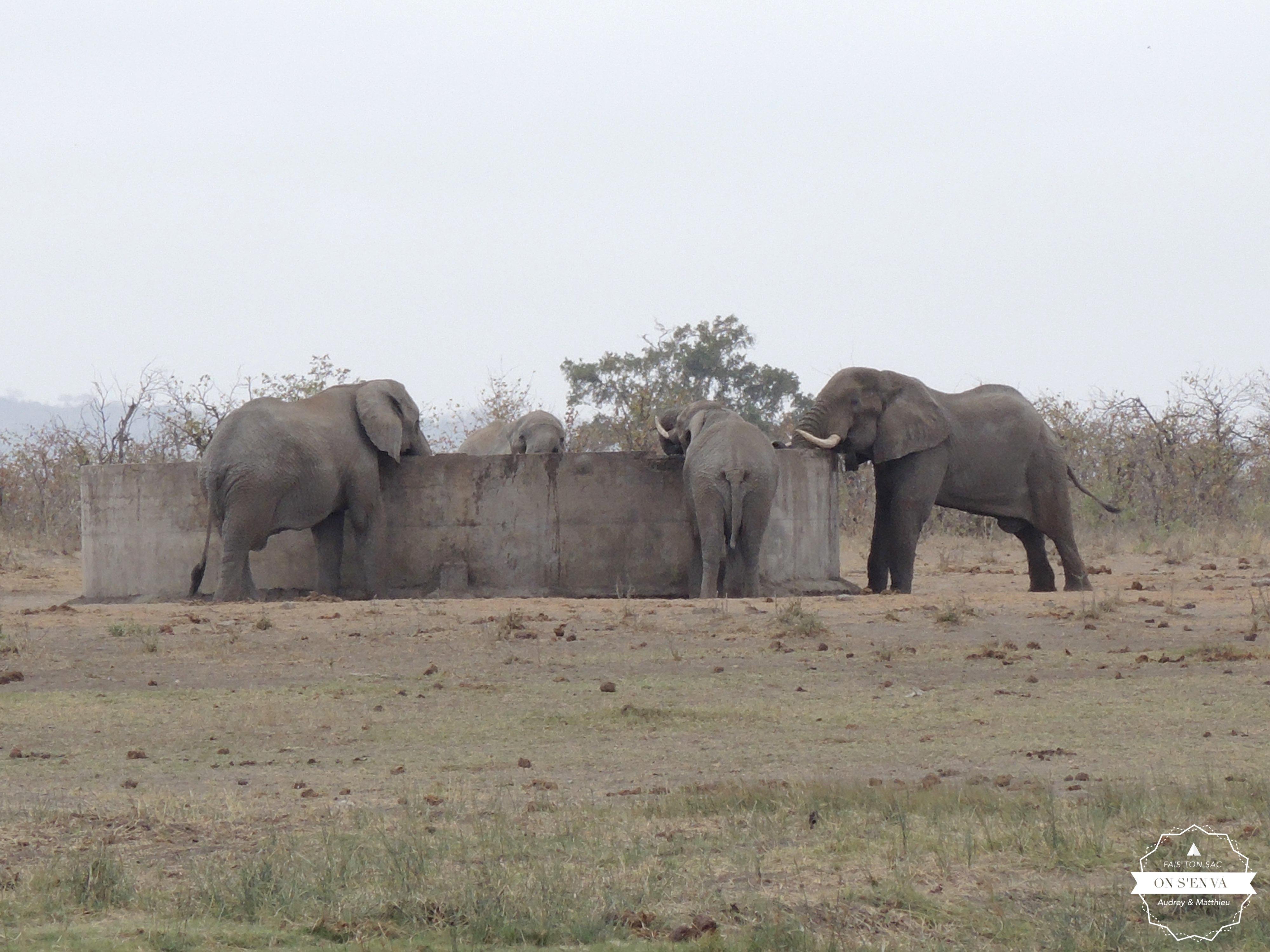 ... les éléphants sont déjà là!