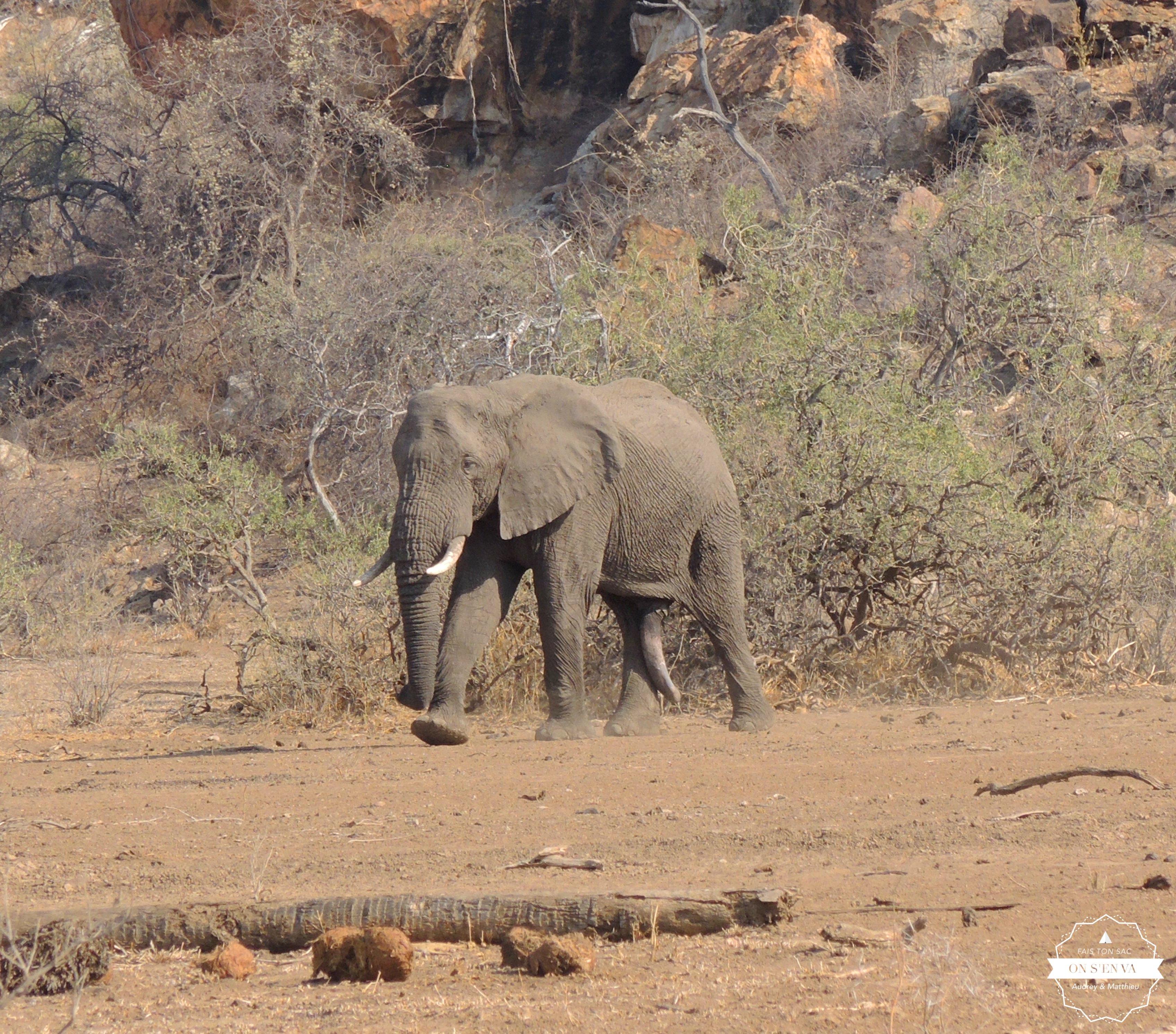 Notre premier éléphant