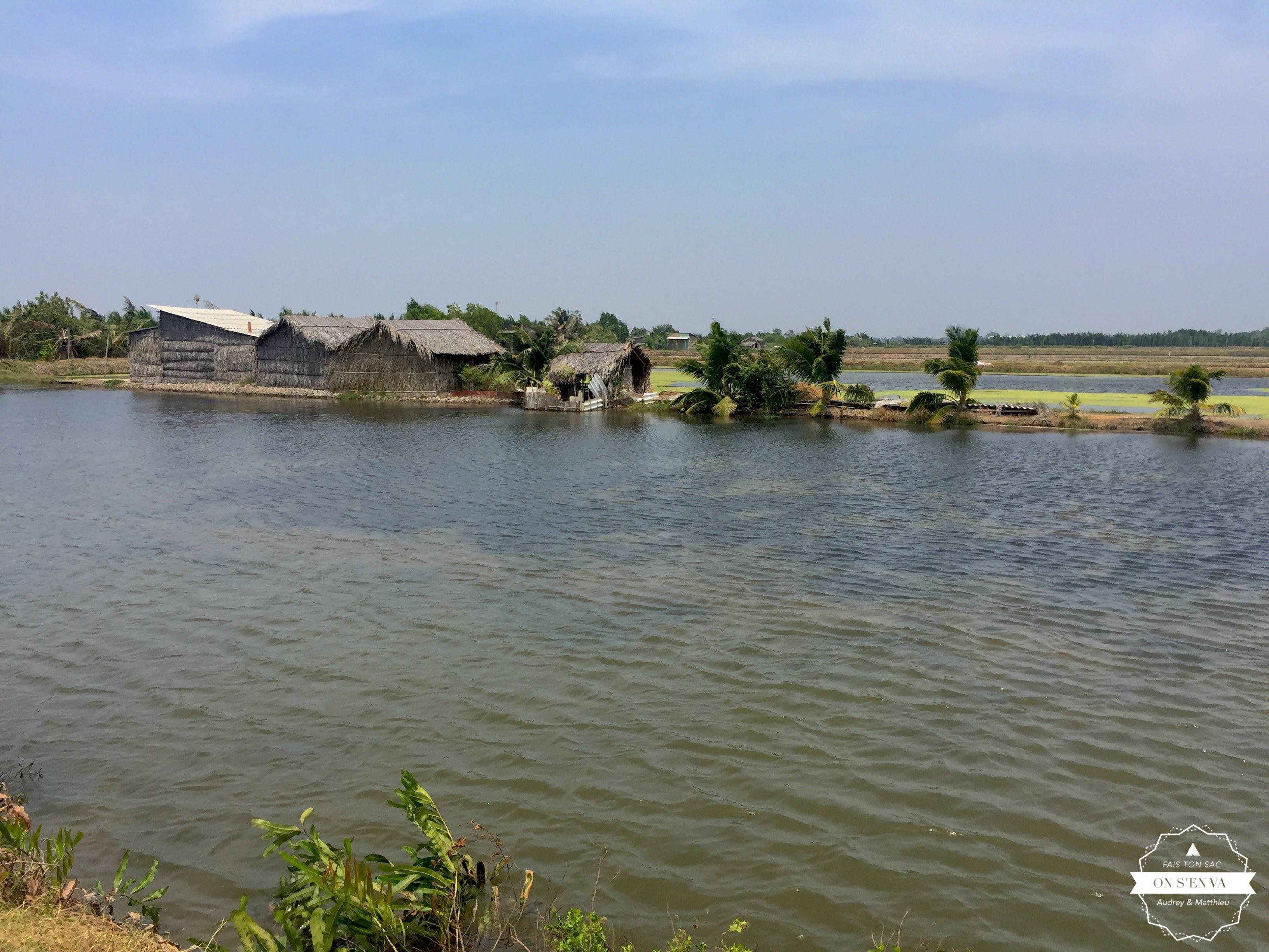 Dans la campagne vietnamienne