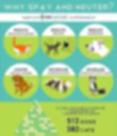 Pet Overpopulation Infographic.jpg