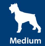 Medium Dog, 21lbs - 50lbs
