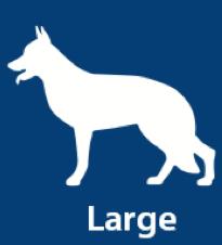 Large Dog, 51lbs - 100lbs