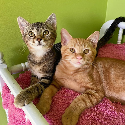 Kittens from The Ranch Cat Rescue