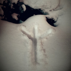 Algiz, drawn under a Yew, in Snow