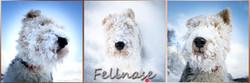#Benji#Fellnase#Hund#HundeShooting#Dogshooting#FotografieBlickwinkel#C.Lischka