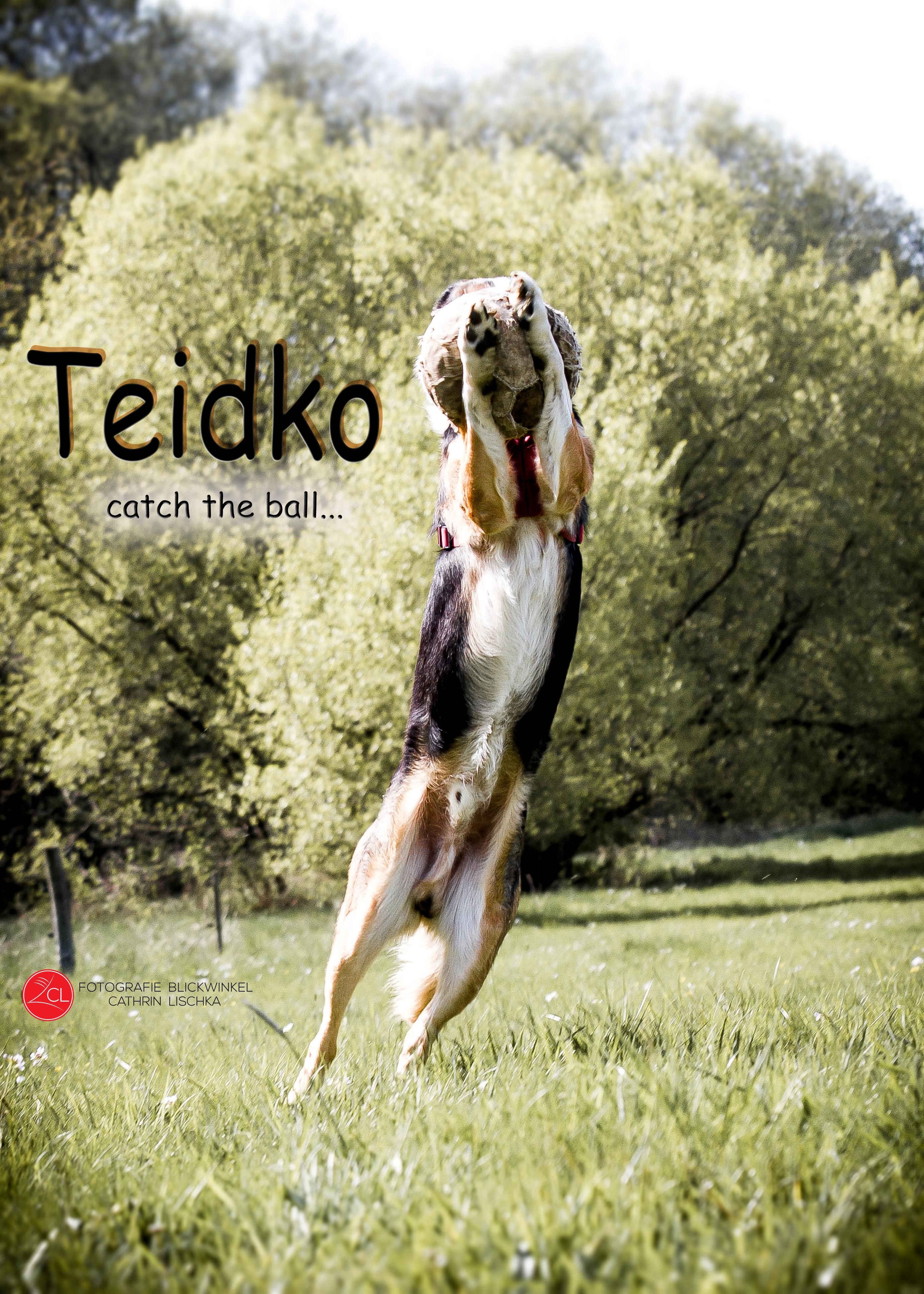 IMG_9625#fotografieblickwinkel_#fotografie_#2017_#Hütehund_#Teidko_#Hundeshooting_#BorderCollie_#Hun