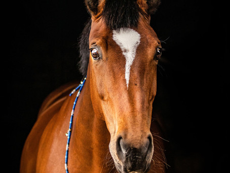 INTRODUCING RHYTHM BEADS TO THE EXTREMELY NERVOUS OR REACTIVE HORSE