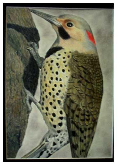 Woodpecker Study