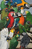 Exotic Parrots.JPG