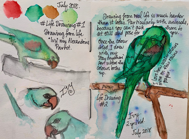 Life Drawing Ivy the Alexandrine