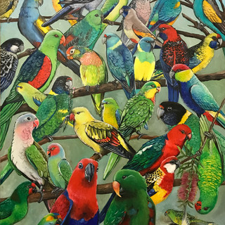 Parakeets of Australia