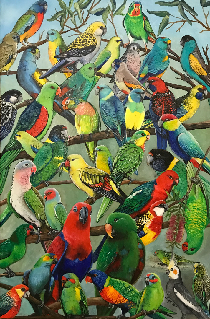 Parakeets of Australila