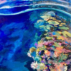 Twilight on Hopkinson Reef