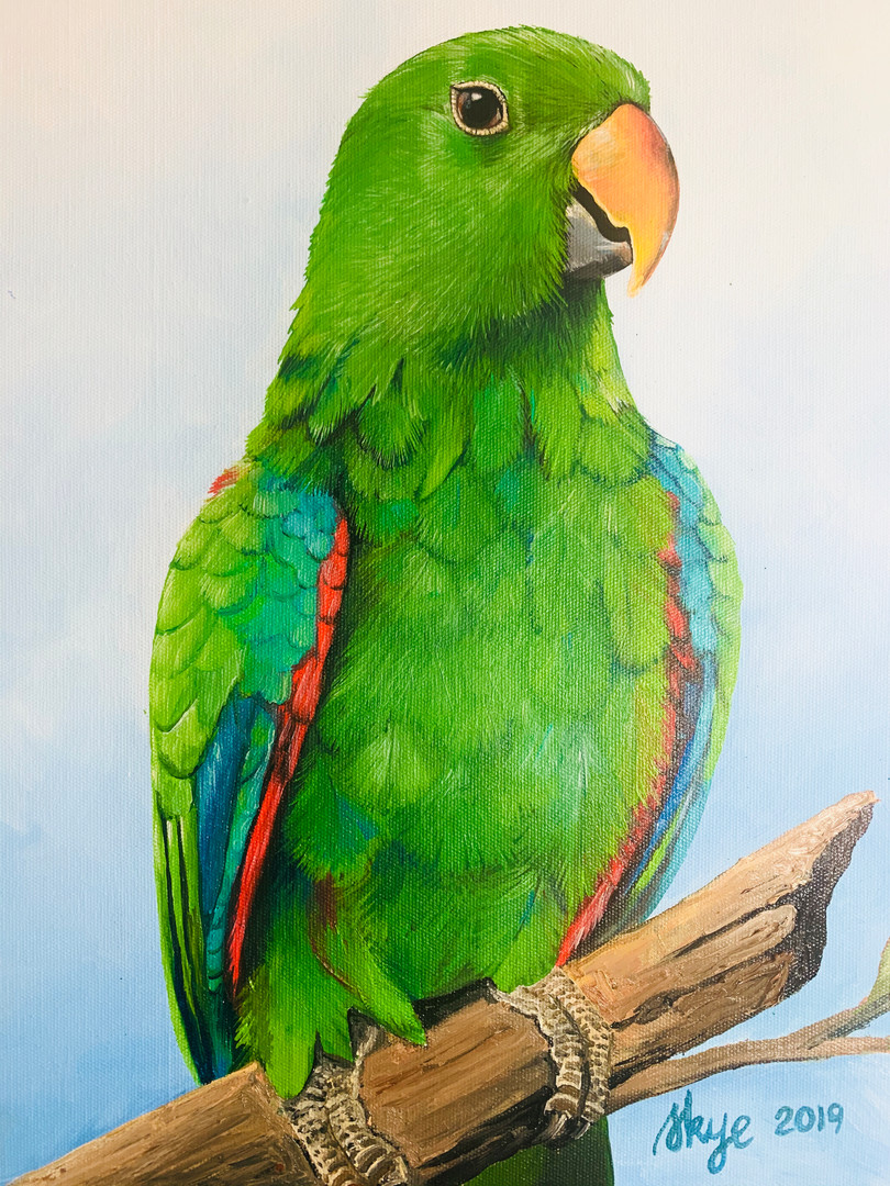 Charlie the Eclectus