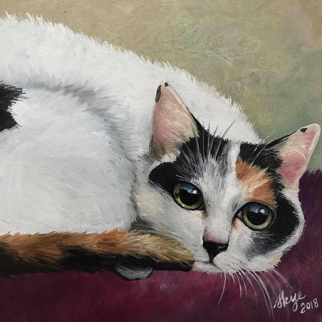 Cat Portrait #1