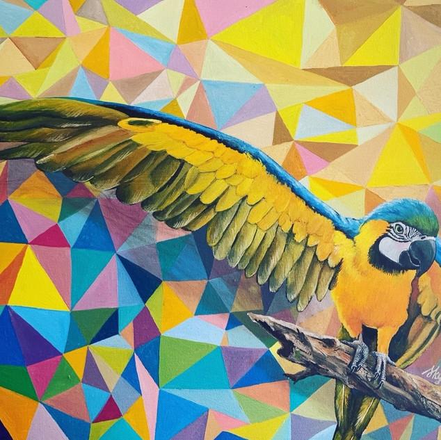 Geometric Macaw